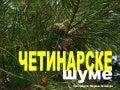 Četinarske šume