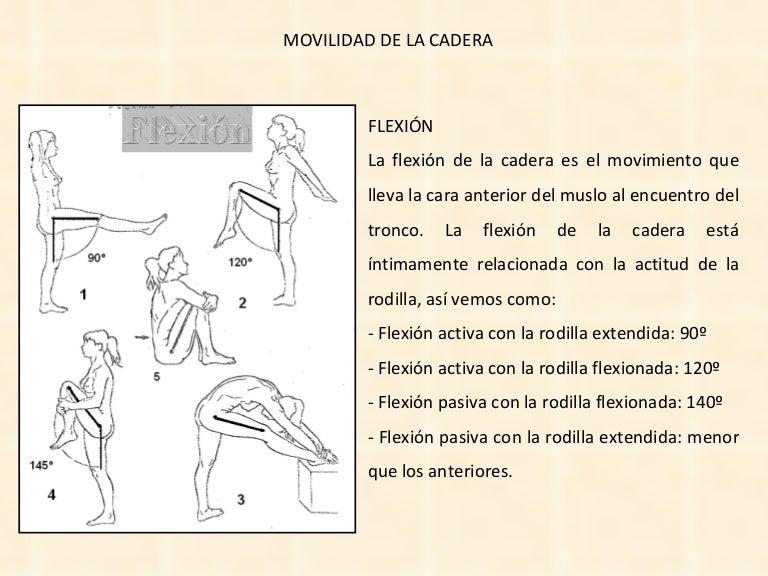 Increíble Flexiona El Muslo En La Cadera Regalo - Anatomía de Las ...