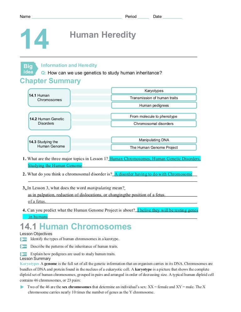 Chapter14worksheets – Chromosome Worksheet