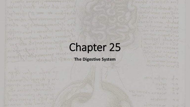 Chapter 25 review Digestive System