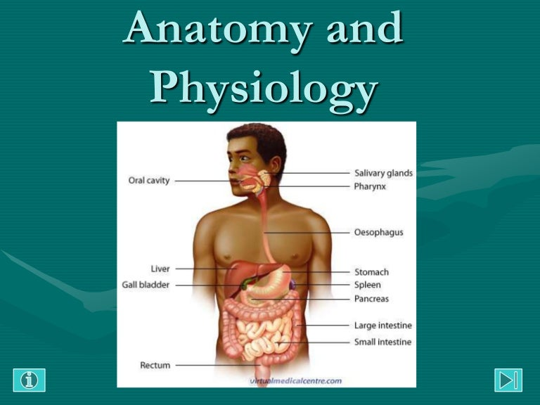 Anatomy and Physiology: Gastrointestinal Tract