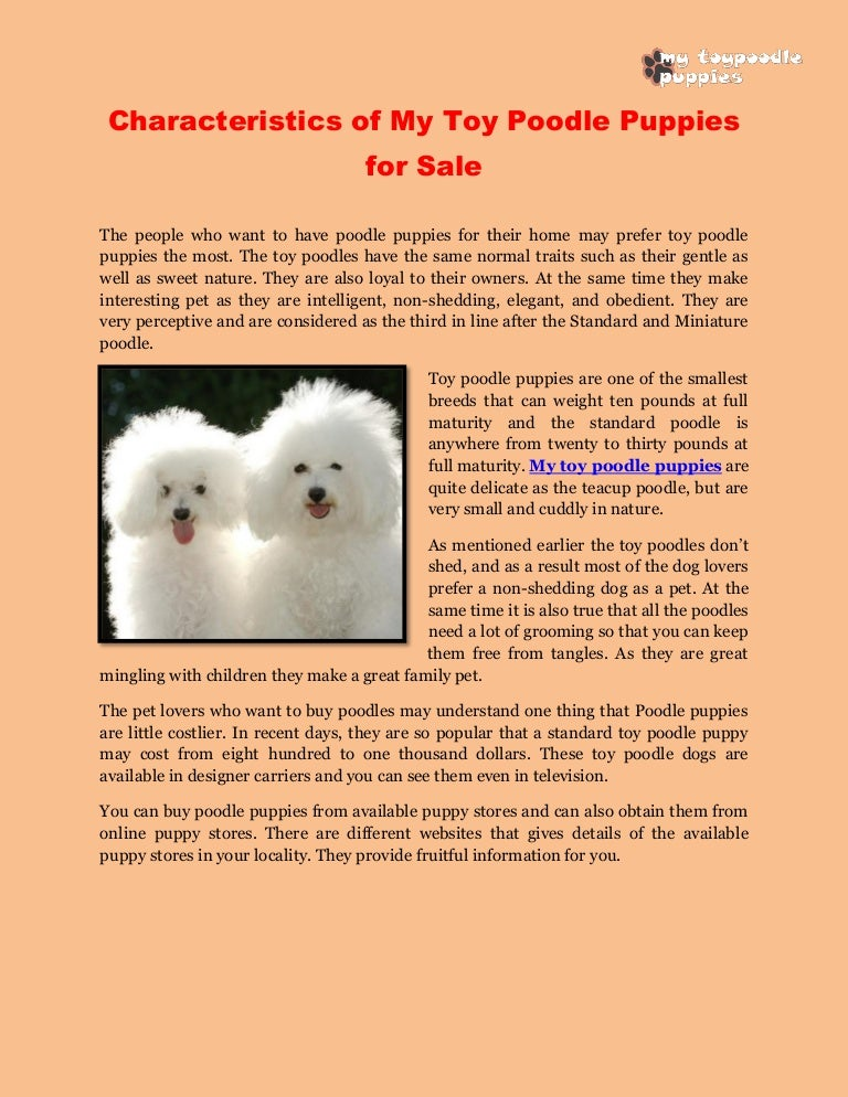 Characteristics of my toy poodle puppies for sale