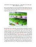 Chế phẩm vườn sinh thái cho rau