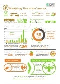 Infographic - Mealybug threat to cassava in SE Asia