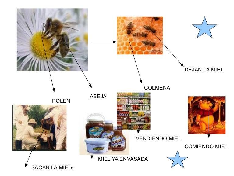 Circuito Productivo Del Tomate : Circuito productivo de la miel