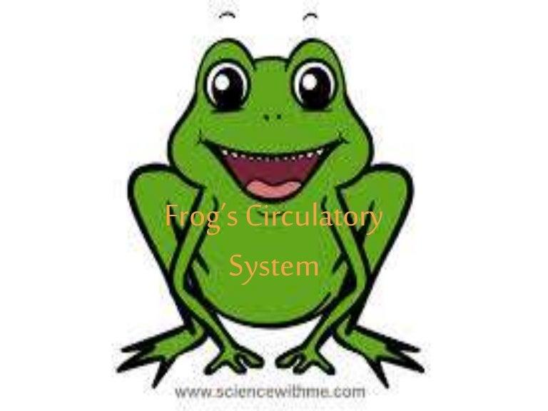 circulatorysystemoffrog 150304003458 conversion gate01 thumbnail 4jpgcb1425429368 - Picture Of A Frog