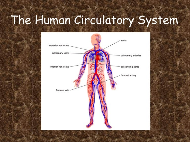 Blood circulatory system diagram pdf wiring diagram electricity circulatory system pdf rh slideshare net human circulatory system diagram circulatory system diagram 5th grade ccuart Images