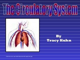 Circulatory system slide show