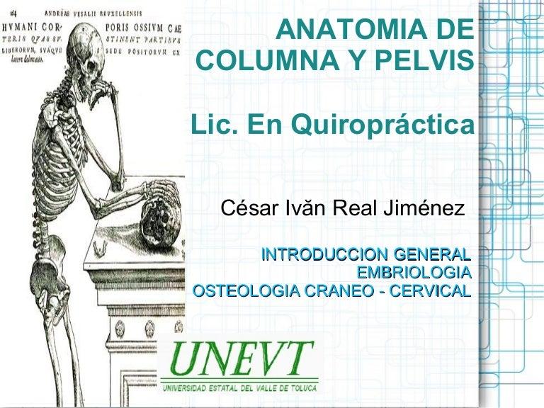 Anatomia de Columna. Generalidades, Parte 1: Craneo-Cervical