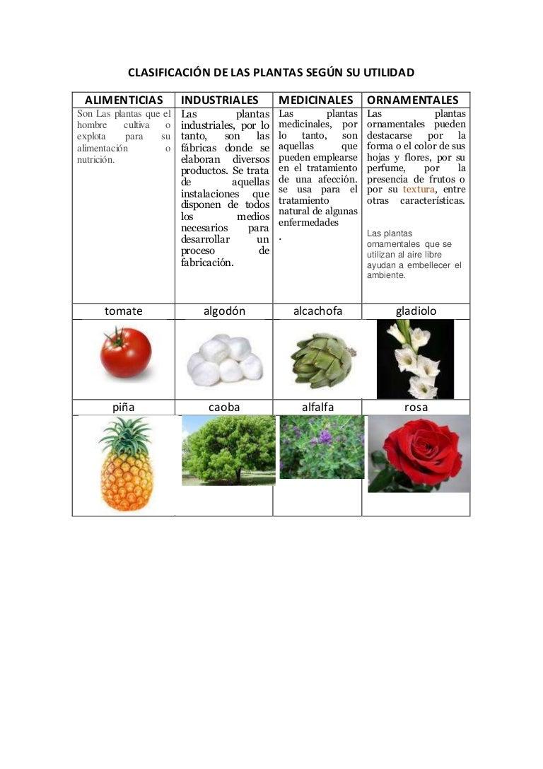 Clasificaci n de las plantas seg n su utilidad for Plantas ornamentales y medicinales