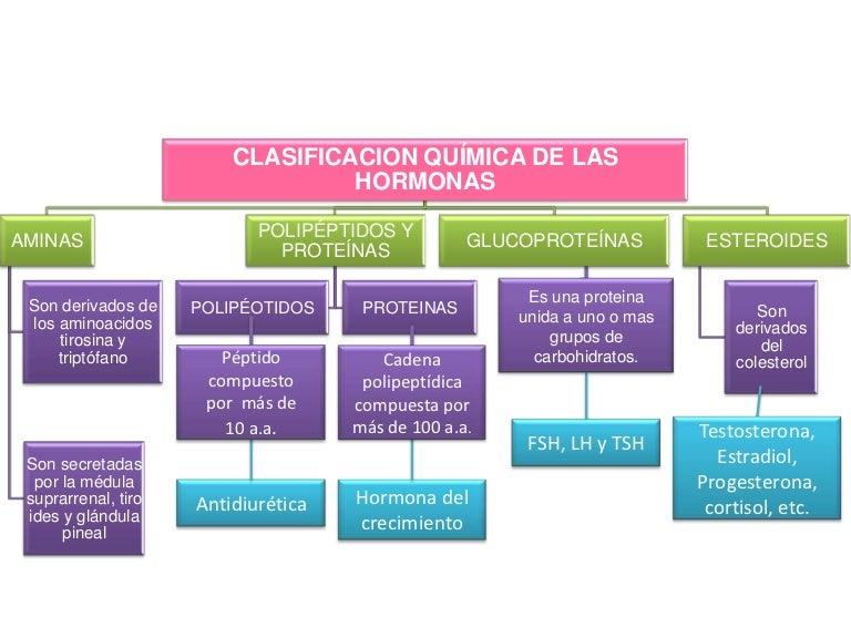 Clasificacion qu mica de las hormonas for Quimica de los alimentos pdf