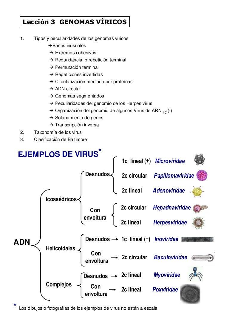 papillomaviridae clasificacion