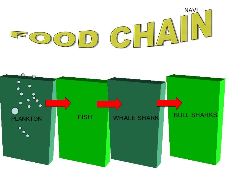 Tiger Shark Food Chain Diagram Trusted Wiring Diagrams