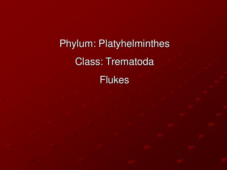 phylum platyhelminthes clasa trematoda modul în care este tratat papilomul