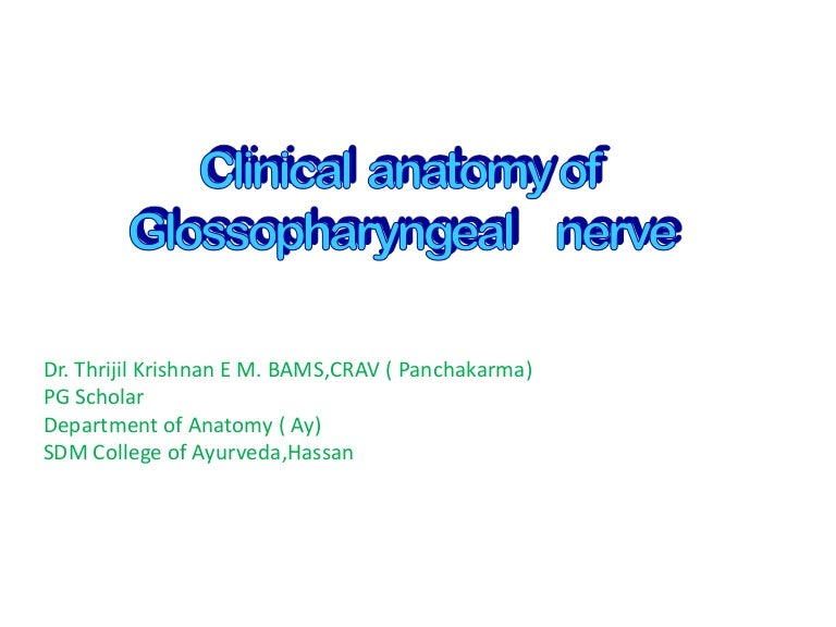 Clinical Anatomy Of 9 Th Cranial Nerve