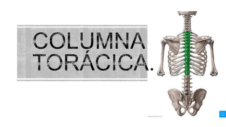 Columna Dorsal Kinesiologia