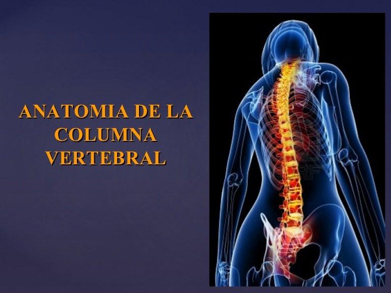 Columna vertebral , Basico