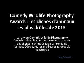Cholet 94 : Salvateur Rugissement Des Cougars