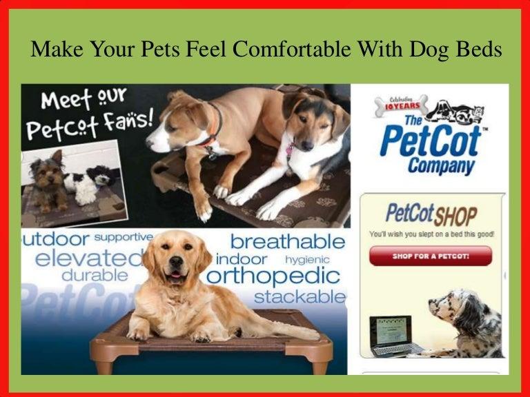buy online pets