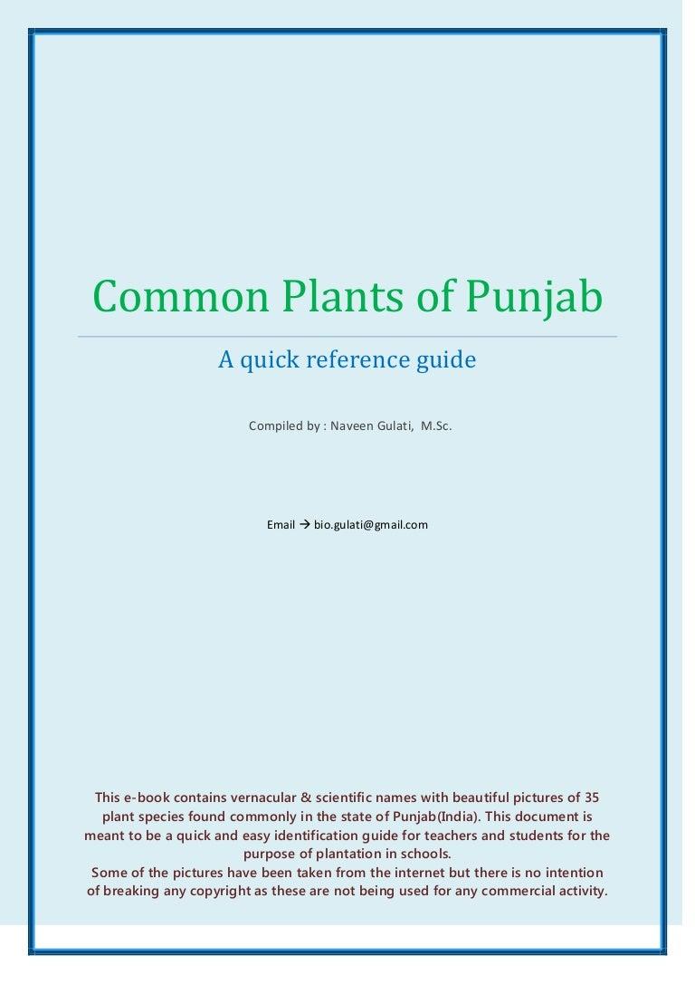 Learn punjabi ebook