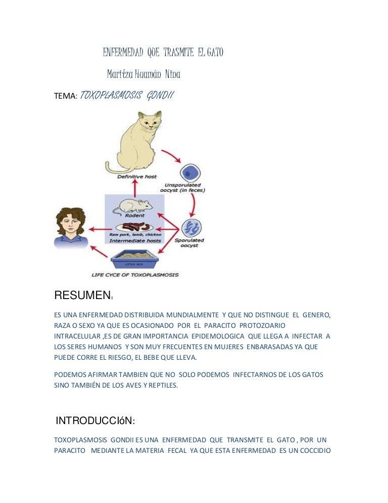 enfermedades q transmiten los gatos a los humanos