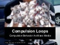 Compulsion Loops