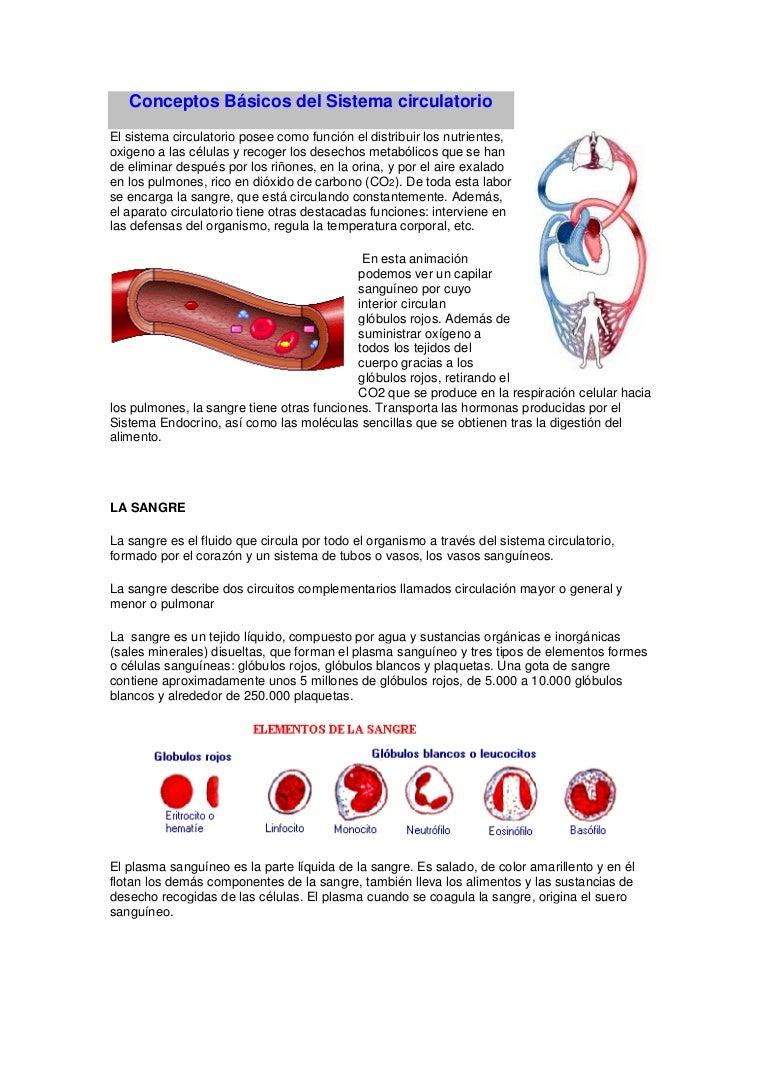 Circuito Sanguineo : Conceptos básicos del sistema circulatorio
