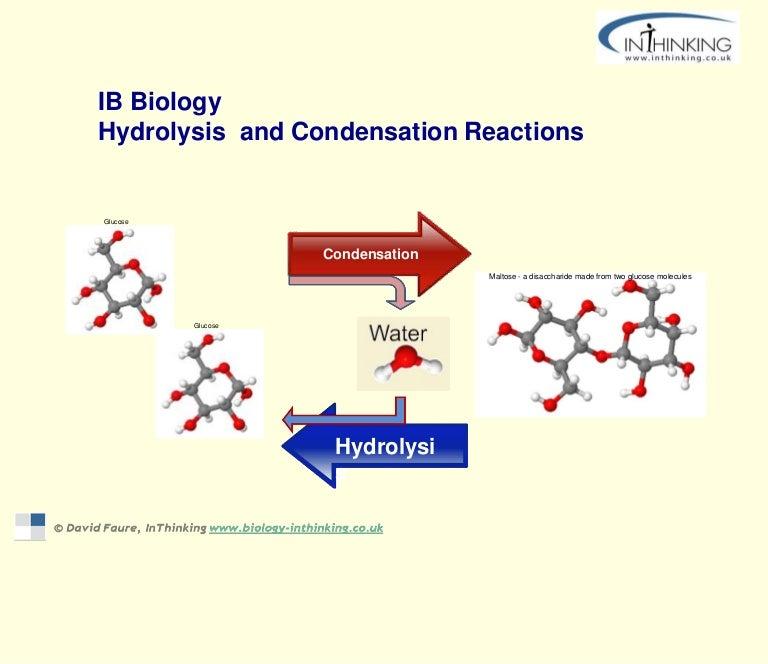 Condensation Hydrolysis