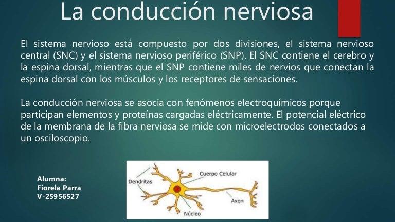 CONDUCCION NERVIOSA EBOOK