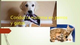 Conducta materna en perros y gatos andrea zapata