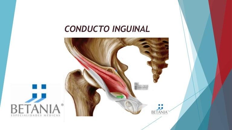 Anatom a de La Regi n Inguinal