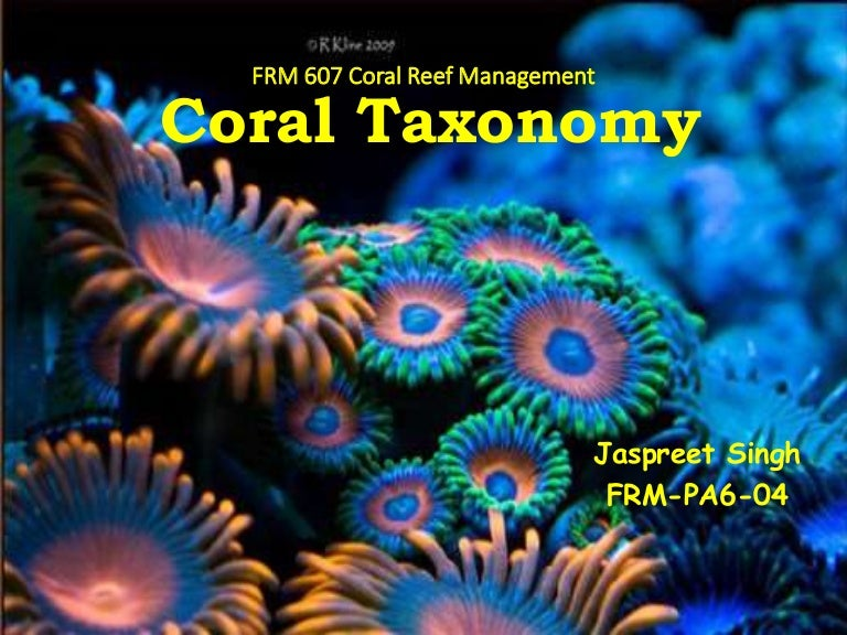 Coral Taxonomy