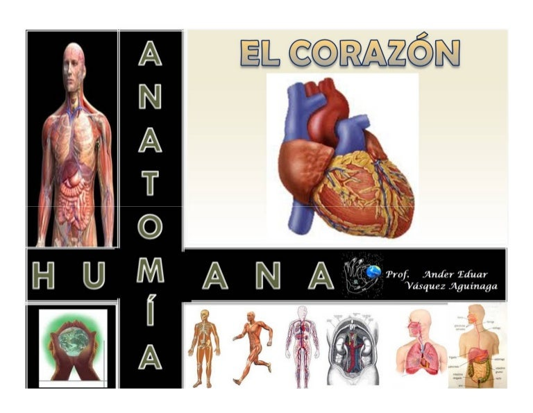 Corazon humano ppt