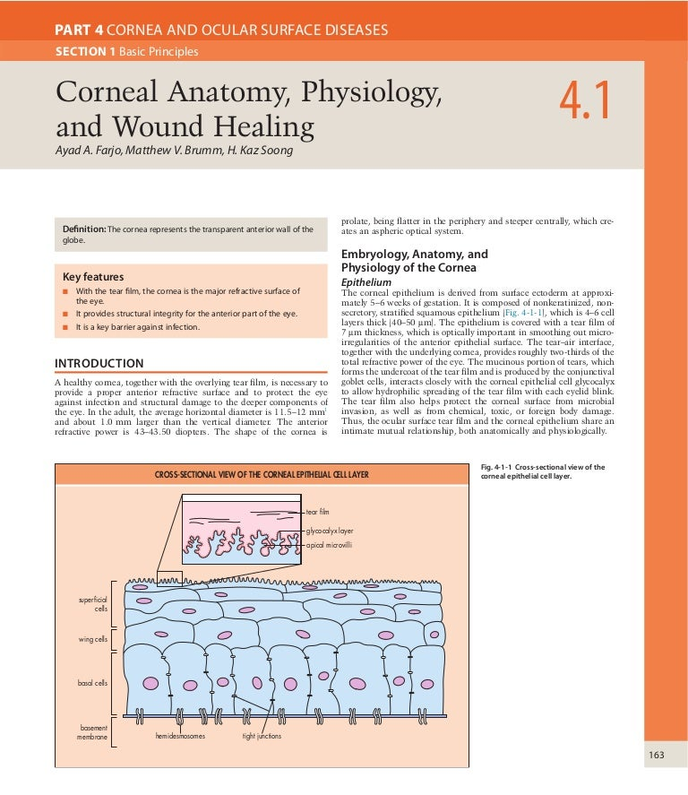 Corneal anatomy physiology and wound healing
