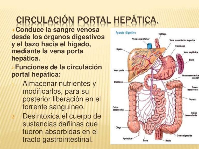 Circulación portal hepática