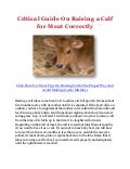 Critical Guide On Raising a Calf for Meat Correctly