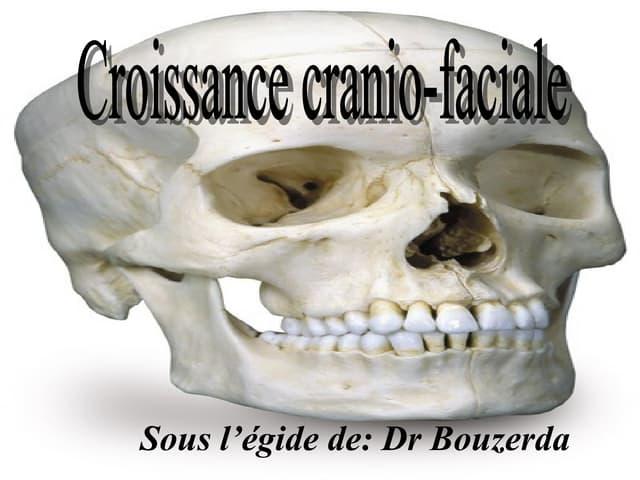 Croissance cranio faciale