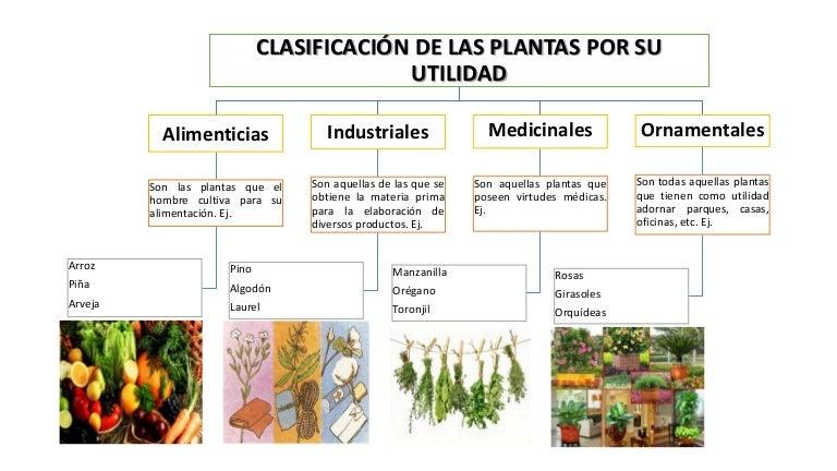 Clasificaci n de las plantas seg n su utilidad for Clases de plantas ornamentales