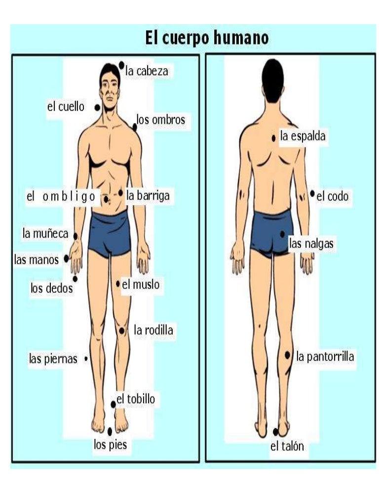 Cuerpo humano for Medidas ergonomicas del cuerpo humano