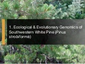 Project Overview: Ecological & Evolutionary Genetics of Southwestern White Pine (Pinus strobiformis)