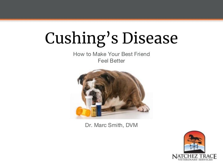 Canine Cushing S Disease How To Make Your Best Friend Feel Better