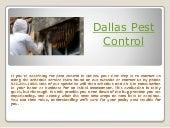 Dallas pest control