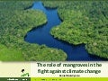The role of mangroves in the fight against climate change