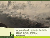 Why peatlands matter in the battle against climate change?
