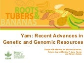 Yam: Recent Advances in Genetic and Genomic Resources