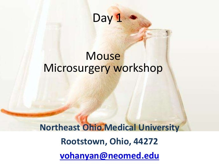 Mouse Microsurgery And Echocardigraphy