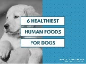 Top 6 Human Foods for Dogs
