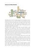 Definição de sociedade em rede