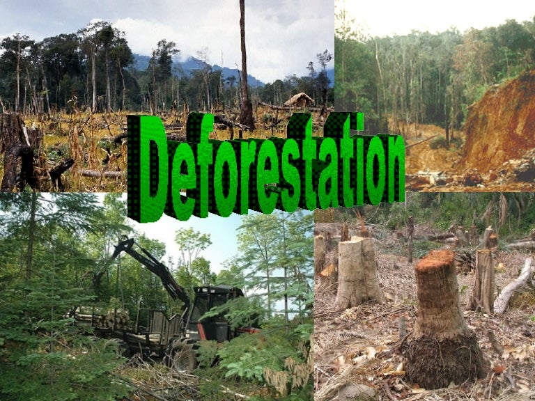 speech on danger of deforestation Deforestation is clearing earth's forests on a massive scale, often resulting in damage to the quality of the land forests still cover about 30 percent of the world's land area, but swaths half.