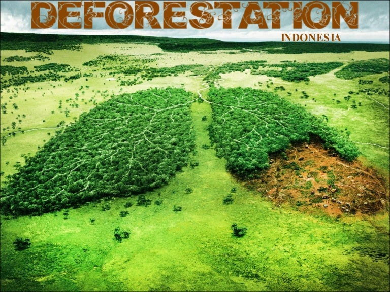 deforestation an overview of global programs and agreements During the 1980s, according to fao´s last global forest assessment (1), the main statistical overview of the state of all of the world´s forests, an area of 150 million ha was deforested the largest areas lost were of tropical forests.